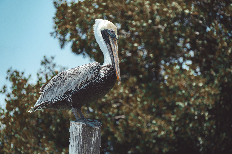Wildlife in Caye Caulker